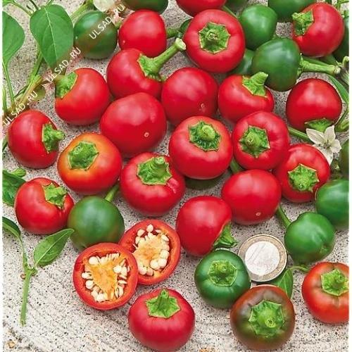 hat-giong-ot-pepper-bi