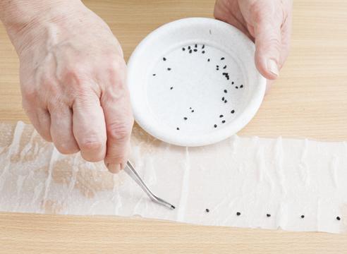 Lấy nhíp gắp các hạt cần gieo