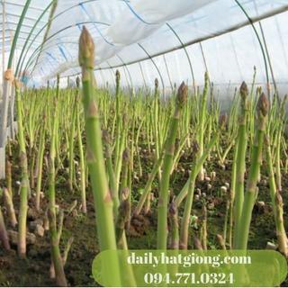 hatgiong mangtay1 (2)
