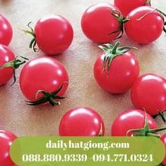 cà chua cherry hồng