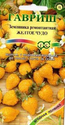 dautayvang (3)
