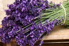 hoa-lavender
