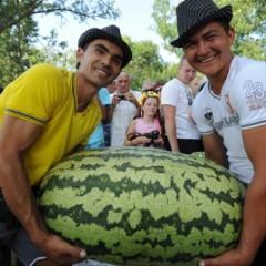 Hạt giống dưa hấu khổng lồ F1 100kg