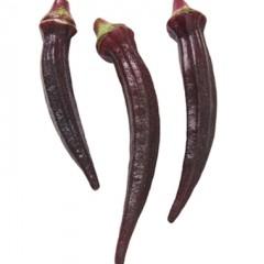 Hạt giống đậu bắp đỏ f1